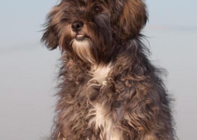 Pet portrait photography Dorset scruff