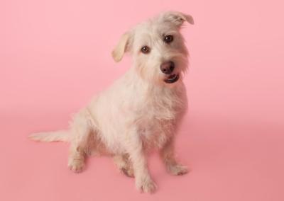 Pet photography Dorset pink