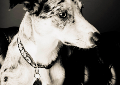 Pet photography Dorset speckled