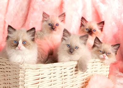 Pet photography Dorset basket of kittens