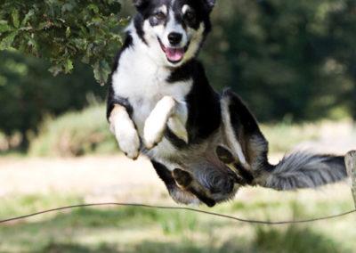 Pet photography Dorset collie