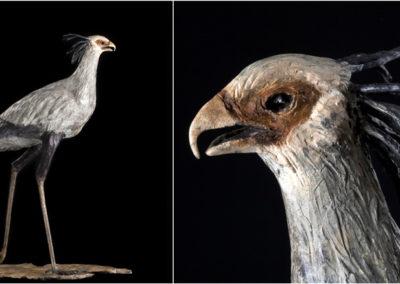 BirdComp copy