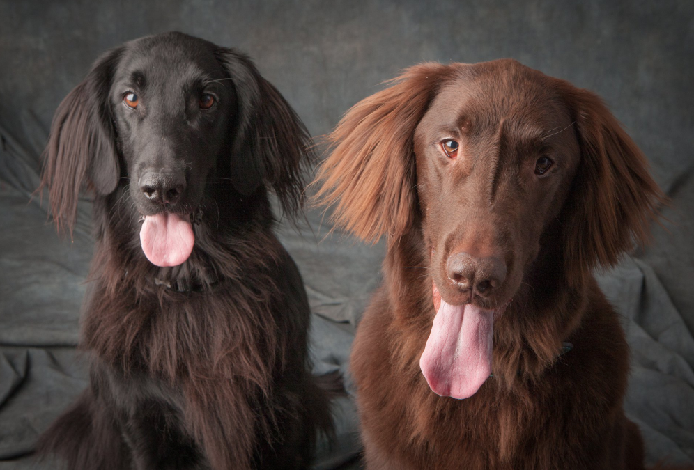 Tracy's family Portrait with her two gorgeous flat coats